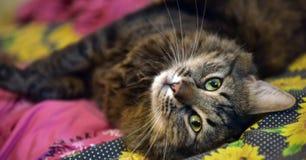 Mooie bruine kat Stock Fotografie