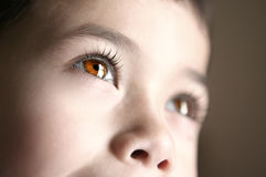 Mooie bruine ogen royalty-vrije stock afbeeldingen