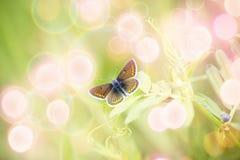 Mooie bruine vlinder op de lentebloem stock foto's