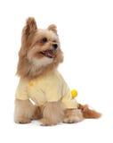 Mooie Buitensporige Hond stock foto