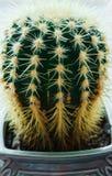 Mooie cactus in een bloempot op de vensterbank in de flat stock fotografie