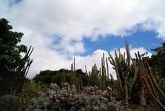 Mooie cactus op een achtergrond van de tuinhemel royalty-vrije stock foto