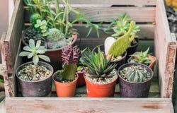 Mooie Cactus in tuin Stock Afbeelding