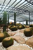 Mooie cactusboom in de tuinen openlucht en parken royalty-vrije stock afbeelding