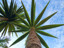 Mooie Cactusinstallaties, Israël Stock Fotografie