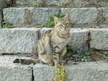 Mooie Cat Sitting bij de Trap van de Archeologische Plaats van Delphi Royalty-vrije Stock Foto