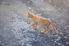 Mooie Cat Walking royalty-vrije stock afbeelding