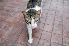 Mooie Cat Walking Stock Afbeeldingen