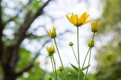 Mooie coneflower met zonlicht royalty-vrije stock fotografie