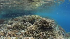 Mooie Coral Reef en Kleine Vissen in Raja Ampat stock video