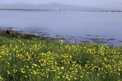 Mooie dag door de fjord Royalty-vrije Stock Foto's