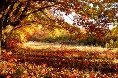 Mooie dag in het de herfstbos met zon Stock Afbeeldingen