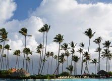 Kokospalmen die in witte wolken slingeren royalty-vrije stock foto