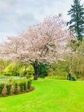 Mooie dag in park royalty-vrije stock afbeeldingen