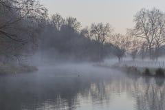 Mooie dageraad met mist in een bos met een meer stock afbeelding
