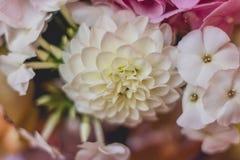 Mooie dahlia Royalty-vrije Stock Fotografie