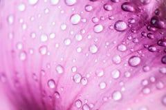 Mooie daling van water op roze bloemblaadjes stock afbeelding