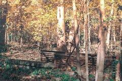 Mooie dalingsbomen stock afbeelding