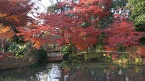 Mooie dalingskleur, brug van de Botanische Tuin van Kyoto stock videobeelden