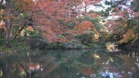 Mooie dalingskleur, brug van de Botanische Tuin van Kyoto stock footage