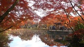 Mooie dalingskleur, kiosk van de Botanische Tuin van Kyoto stock videobeelden