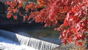 Mooie dalingskleur, rivier dichtbij TogetuKyo-Brug stock footage