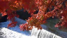 Mooie dalingskleur, rivier dichtbij TogetuKyo-Brug stock videobeelden