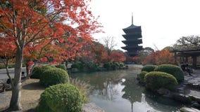 Mooie dalingskleur van aan-ji- stock video