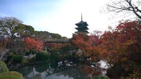 Mooie dalingskleur van aan-ji- stock videobeelden