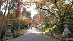 Mooie dalingskleur van Hiyoshi Taisha stock footage