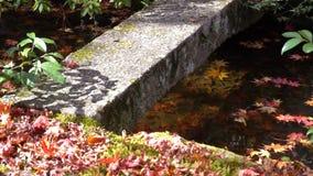 Mooie dalingskleur van jojakko-Ji stock footage