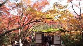 Mooie dalingskleur van jojakko-Ji stock videobeelden