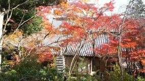 Mooie dalingskleur van jojakko-Ji stock video
