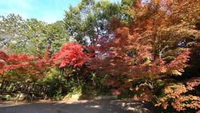 Mooie dalingskleur van Komyo -komyo-ji stock video