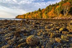 Mooie dalingskleuren van het Nationale Park van Acadia in Maine stock afbeelding