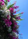 mooie de bloemenhemel van het aardclose-up Stock Foto