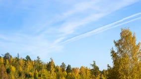 Mooie de herfst bos Gele bomen tegen de blauwe hemel royalty-vrije stock foto's