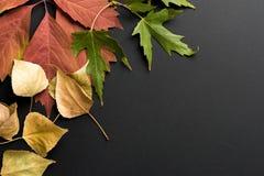 Mooie de herfstachtergrond Stock Foto