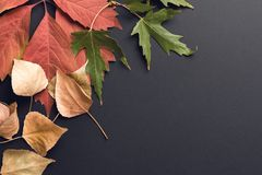 Mooie de herfstachtergrond Stock Fotografie