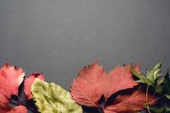 Mooie de herfstachtergrond Royalty-vrije Stock Fotografie