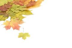 Mooie de herfstachtergrond. Stock Foto