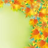 Mooie de herfstachtergrond met bladdaling Stock Foto
