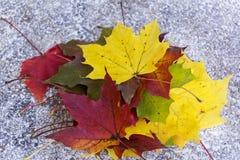 Mooie de herfstbladeren Stock Fotografie