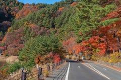 Mooie de herfstbladeren en bomen bij Momiji-tunnel Royalty-vrije Stock Afbeeldingen