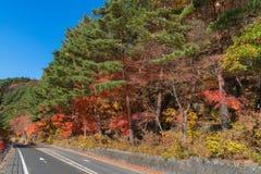 Mooie de herfstbladeren en bomen bij Momiji-tunnel Stock Foto