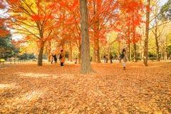 Mooie de herfstbladeren van Japan in Meiji Jingu Gaien Park van Tokyo royalty-vrije stock afbeelding