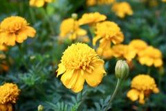 Mooie de herfstbloemen Royalty-vrije Stock Foto's