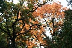 Mooie de herfstbomen royalty-vrije stock fotografie