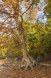 Mooie de herfstbomen Royalty-vrije Stock Afbeelding
