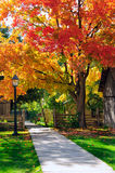 Mooie de herfstbomen en houten omheining Stock Foto
